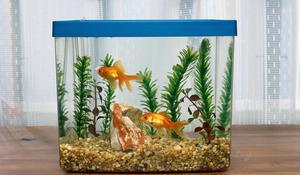 KROK III - Urządzanie akwarium